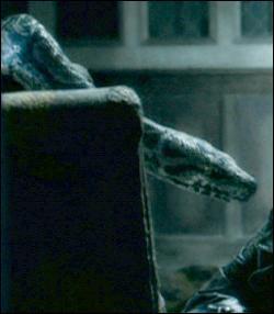 Comment s'appelle le serpent de Voldemort ?
