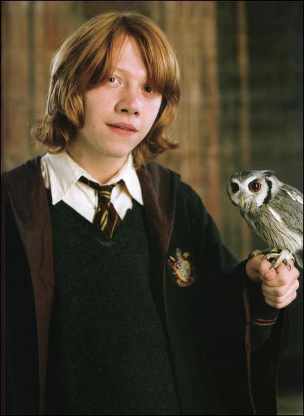 Comment s'appelle la petite chouette de Ron ?