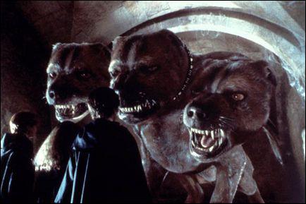 Comment s'appelle le chien à trois têtes d'Hagrid qui gardait la pierre philosophale ?