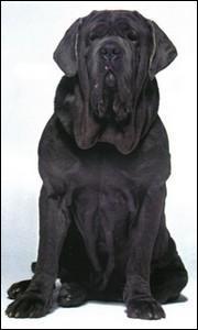 Comment s'appelle le chien d'Hagrid ?
