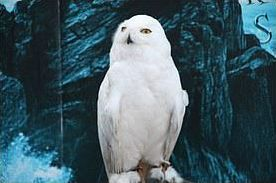Les animaux dans Harry Potter