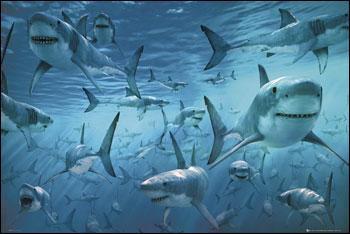 Combien existe- t-il environ d'espèces de requins ?