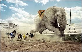 Je me demande si cet éléphant avait le droit de participer à une course de ...