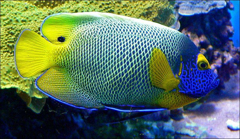 Enfin, à quelle famille de poissons appartient ce magnifique spécimen ?