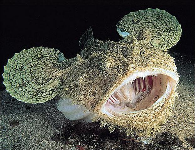 Ce poisson plat, de couleur brune ou grisâtre, est un excellent chasseur à l'affût ! Il se tapit sur les fonds sableux avant de se ruer sur sa proie. C'est :