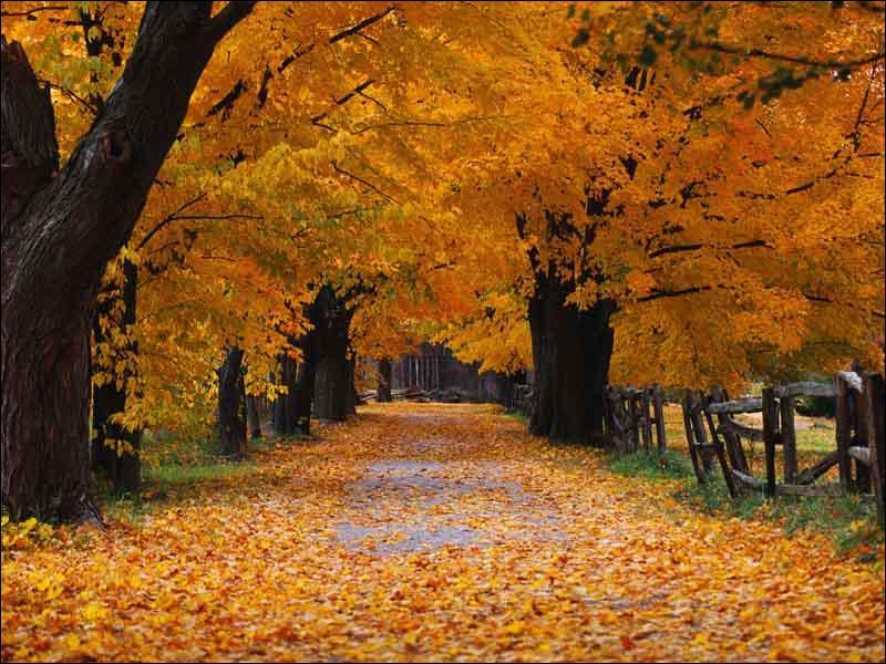 'L'automne' de qui est ce poème ?