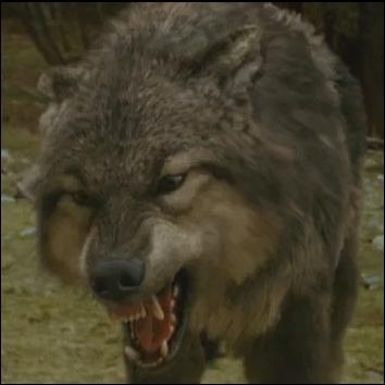 Dans Twilight, chapitre III - Hésitation, quel loup saute sur Emmett lors de la poursuite de Victoria ?