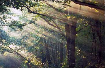 Dans quel département breton se trouve principalement la légendaire forêt de Brocéliande ?