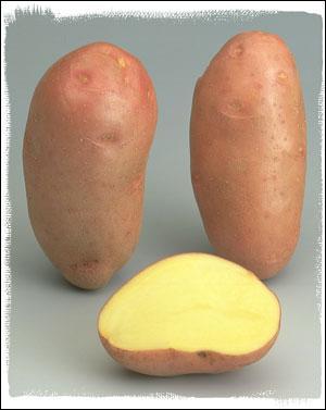 Quelle est cette pomme de terre ?