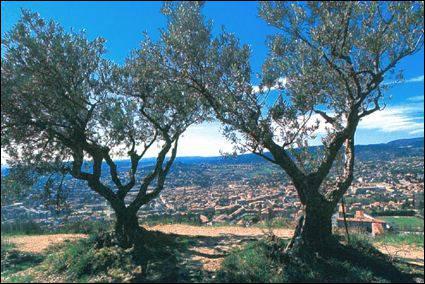 Quelle est cette ville de Haute-Provence célèbre pour son huile d'olive et pour avoir été le lieu de tournage de quelques films avec Fernandel ?