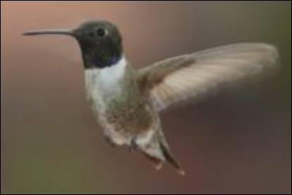 Mammifère ou oiseau ?