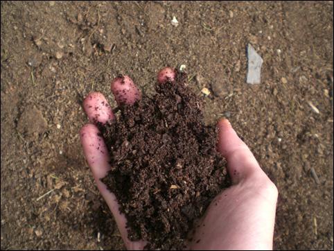 Comment appelle t-on la matière qui était autrefois une feuille morte, tombée sur le sol , puis transformée en terre ?