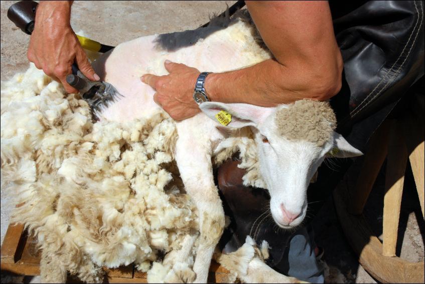 A quoi peut bien servir ma laine dans la construction de la maison ?