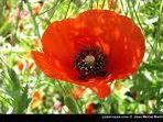 Les différentes fleurs en photos