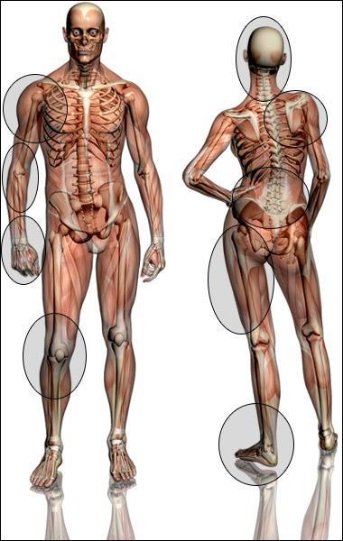 Thème Corps Humain : De combien de cellules en moyenne est composé le corps humain ?