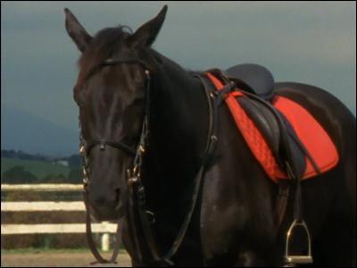 Quizz sur le club du grand galop quiz chevaux equitation - Grand galop le cheval volant ...