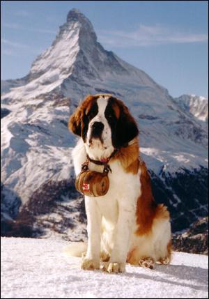 Quelle est la race de chien de beethoven ?