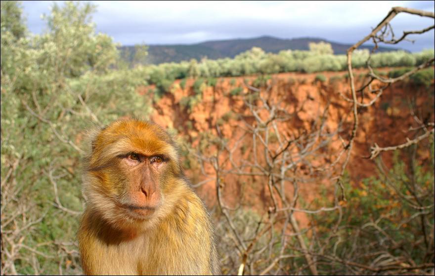 Quelle est cette varieté de singe ?