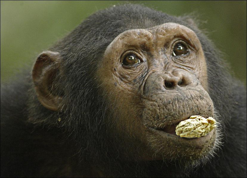 Comment s'appelle ce singe ?