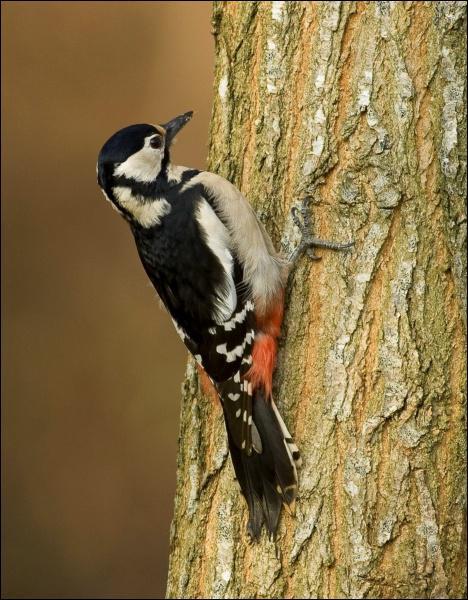Donnez-moi le nom de cet oiseau :