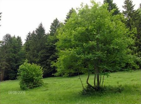 Quel est cet arbre ? (1)