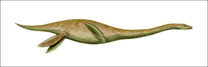 Quel est le plus grand plésiosaure (20 mètres) ?