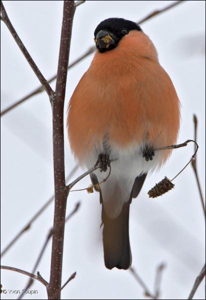 Comment se nomme cet oiseau ?