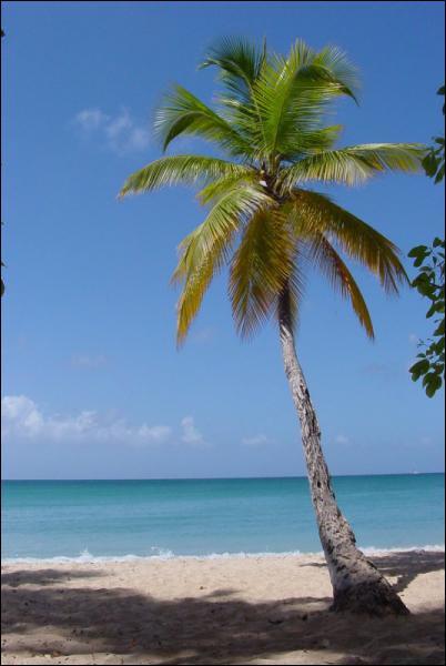 Quel pays a pour emblème le palmier ?
