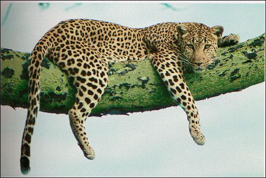 Quelle est la bonne orthographe de cet animal ?