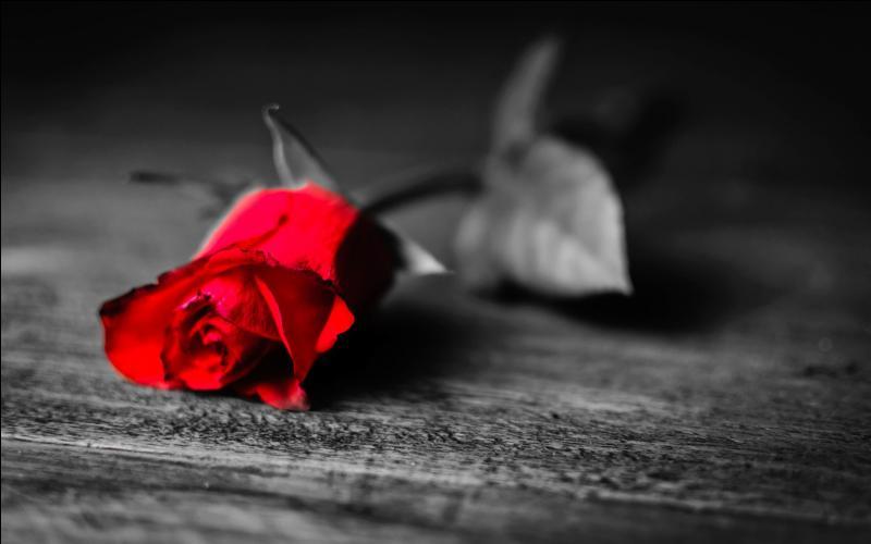 Why do you sleep so still, I'll wake you tomorrow and you will be my feel, and you will be my feel...