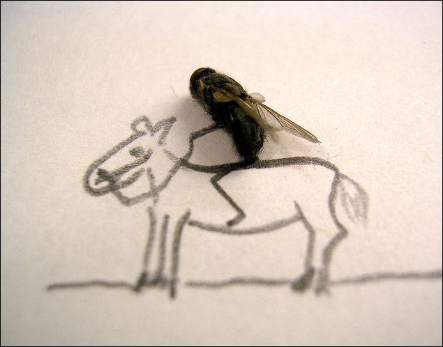 Que fait cette mouche ?