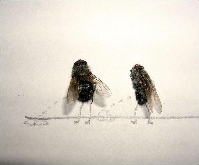 Que font ces mouches ?