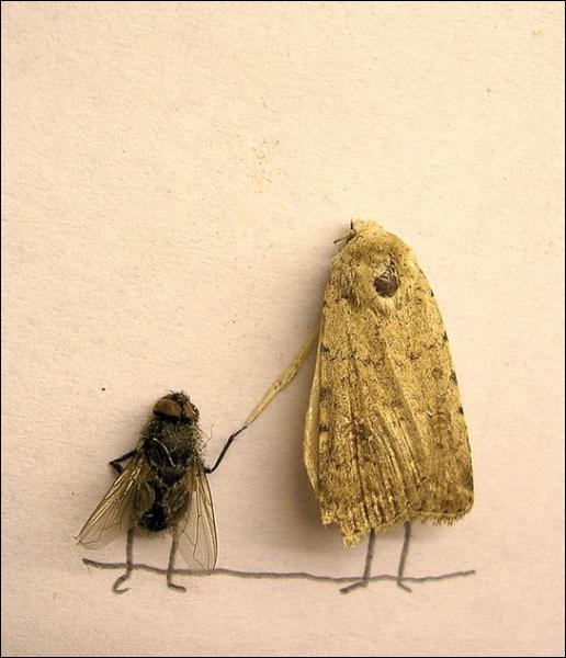 Que font ces insectes ?