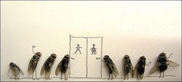 Qu'attendent ces mouches ?