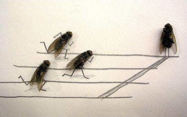Les mouches déboulent ! Que miment ces mouches ?