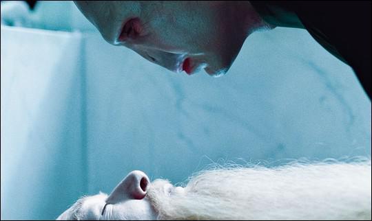Pourquoi Voldemort viole-t-il la sépulture de Dumbledore ?