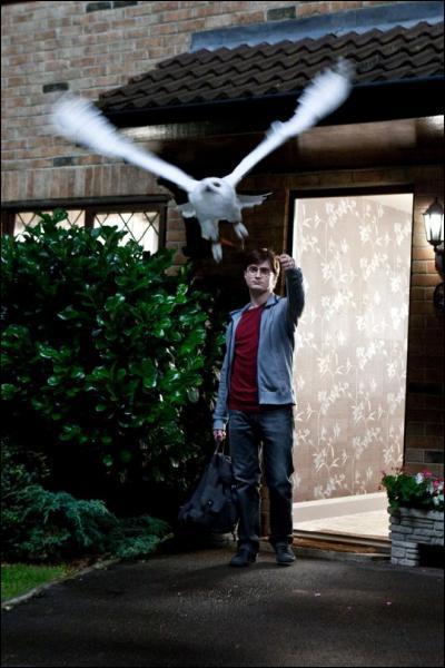 Que devient Hedwige dans cet opus ?