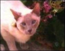 Comment se prénomme le chat des sœurs Halliwell ?