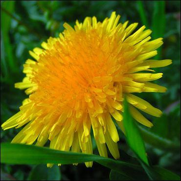 Comment se nomme cette fleur ?