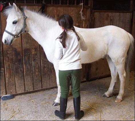 Les postérieurs du poney sont situés