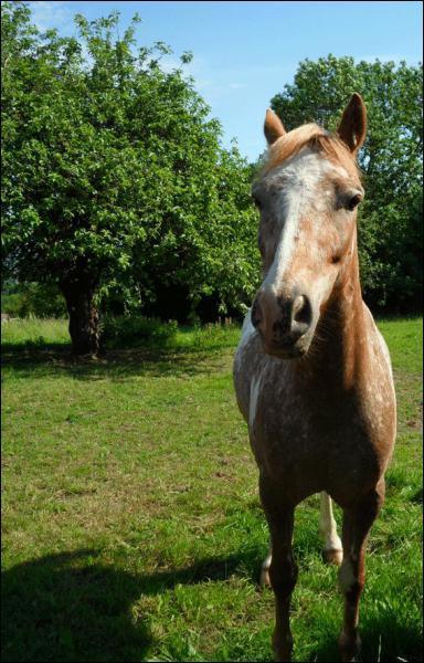 Un poney lymphatique a un tempérament