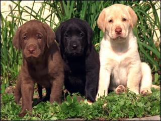 Quelle est la race de ce petit trio ?