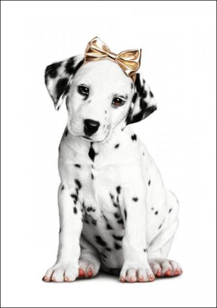 Cette chienne est de race...