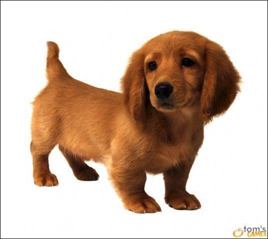Et ce chien ?