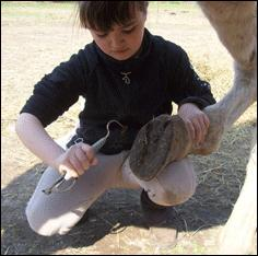 La bonne position à avoir quand tu cures les pieds de ton poney :