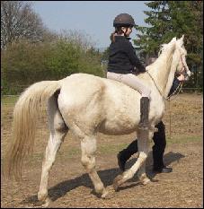 Monter à cru signifie que le poney n'a pas de :