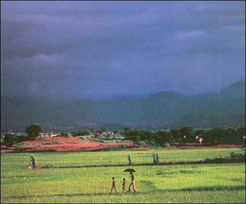 A quel climat correspond ce paysage ?