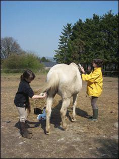 Le temps du pansage est variable selon la longueur du poil, la propreté du cheval et sa taille.