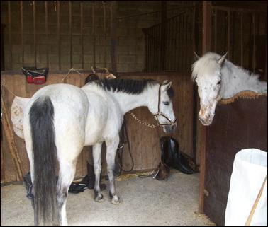 Prodiguer des soins au cheval ne se fait qu'avant le cours, et non après.