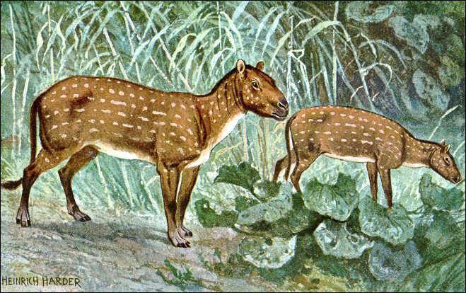 Comment se nomme le premier ancêtre du cheval ?